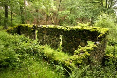 dinas-emrys-gozd
