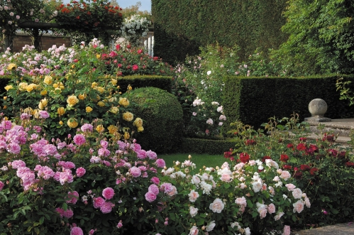 Este es el David Austin Rose Garden. Así me imagino le iba quedando a Lobbi su jardín :D